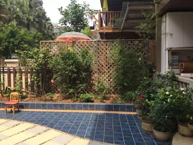 院子里葡萄架