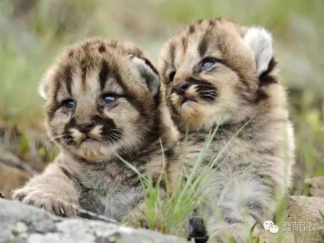 你见过这些动物年幼时候的样子吗?简直要萌化了!-蠢萌说