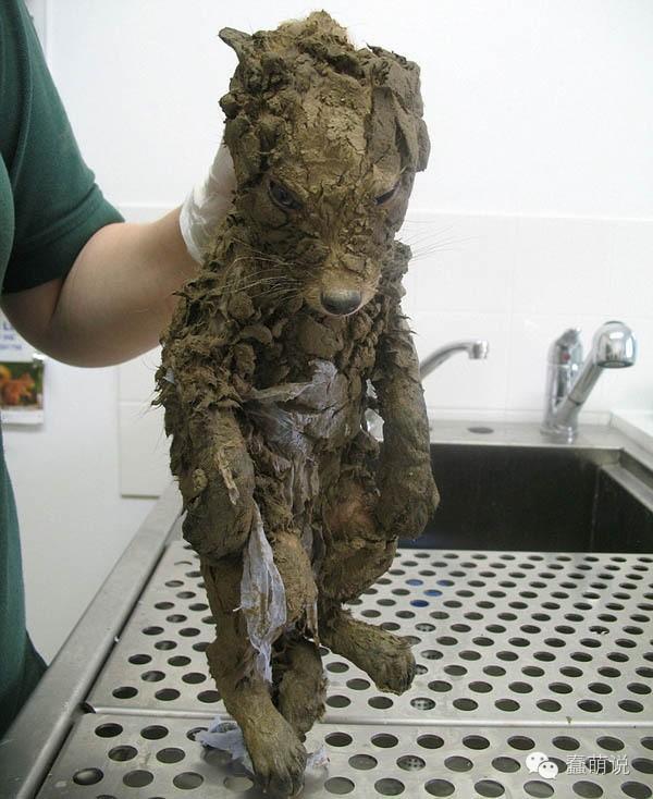 伦敦发现野生穿山鼠?洗净后才发现是……-蠢萌说