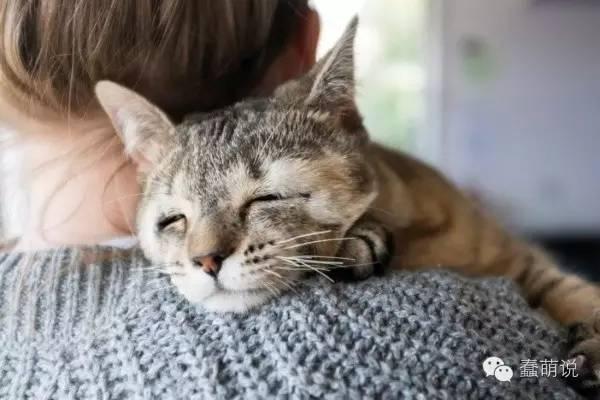 可怜小奶猫天生没眼睑,手术后变成最独特猫咪!-蠢萌说