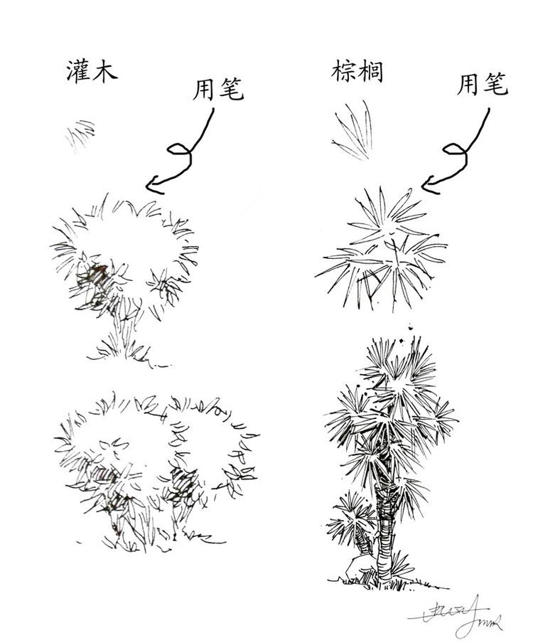 室外树单体手绘