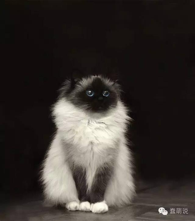 20只世界上最毛绒绒的猫咪!抱着就不想放下来了-蠢萌说