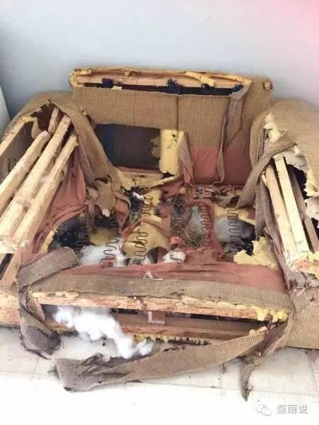 三小时拆毁一座沙发!啧啧,汪星人战斗力果然不低-蠢萌说