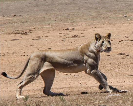 世界上最壮的动物们!对!是动物!敢比吗?