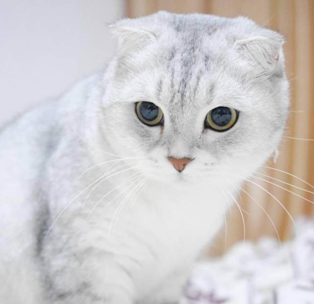 她领养了只折耳猫,最近兽医告诉她一个残酷的事实