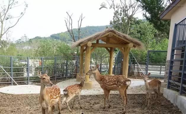苏州上方山森林动物世界28号开园?最新的官方回应是.图片