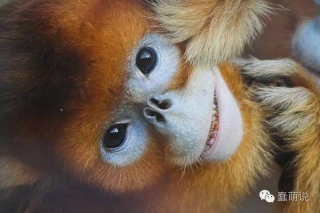 地球上还真有这样奇怪的动物存在!萌是必须的-蠢萌说