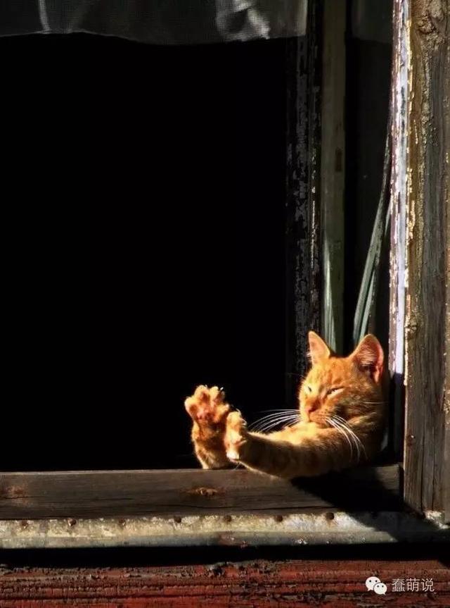 这些懒猫又教会了我们不少放松身心的姿势!-蠢萌说