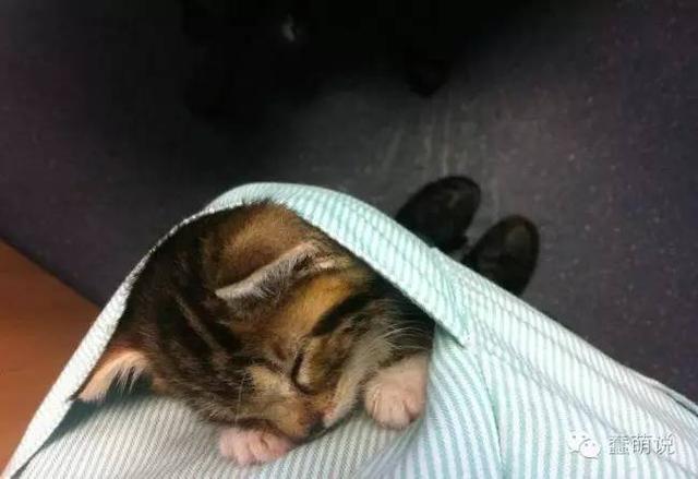 如果每个人的口袋里都像这样装了一只小猫咪,那该多美好!-蠢萌说