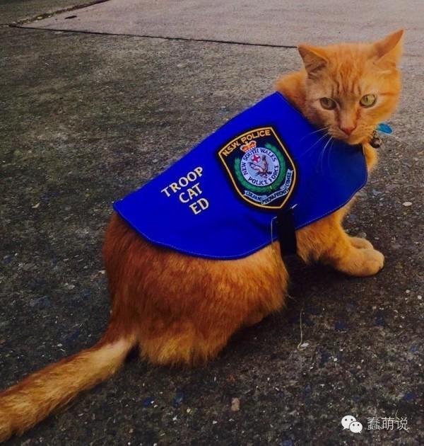 警猫在值勤时间睡懒觉被逮!上级:警察过萌不处分-蠢萌说
