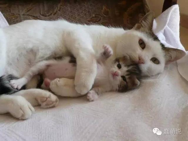 谁能抵抗的住小奶猫们模仿猫妈妈时候的样子!-蠢萌说