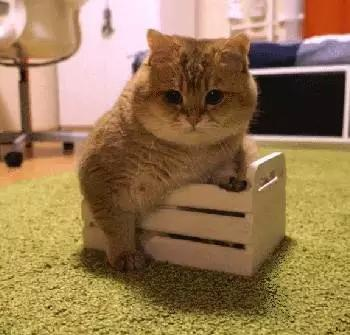 爆笑萌宠:据说这只胖猫很火?(第1817期)