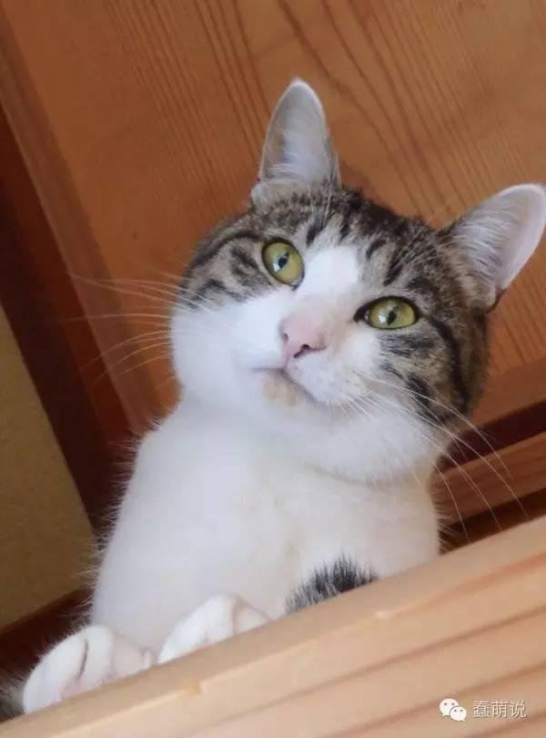 家里猫咪竟然是绝世轻功高手?简直吓死铲屎官了-蠢萌说