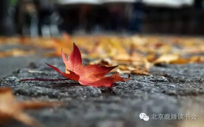 秋天的思念