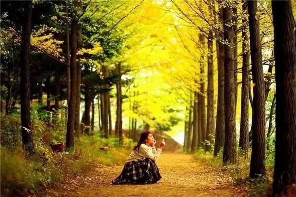 5104,秋风起了,桐叶飘...(原创) - 春风化雨 - 诗人-春风化雨的博客