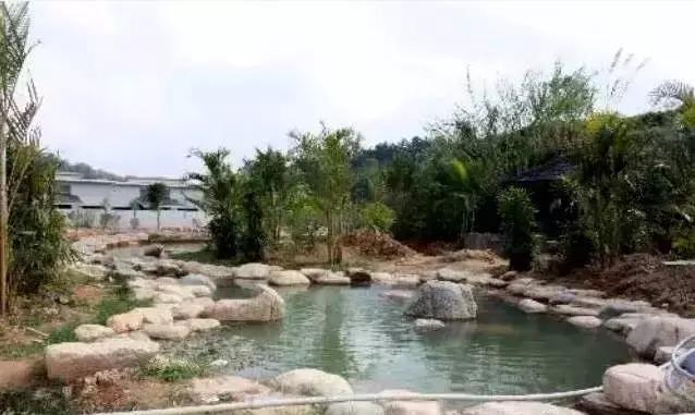 美丽陆河?上护|寄情田园风景感觉不一样的美