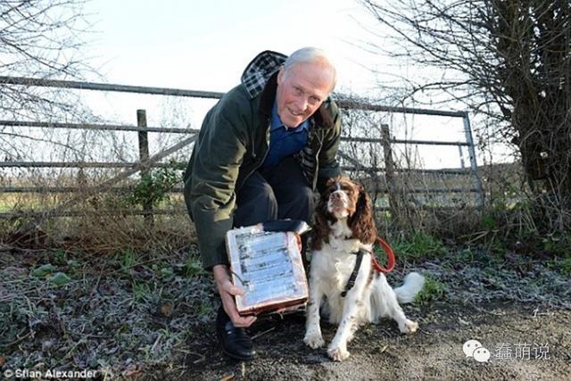 狗狗与主人外出散步时,竟意外挖出价值十万的宝贝-蠢萌说