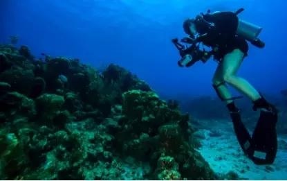 水下广角摄影的一些操作技能及诀窍