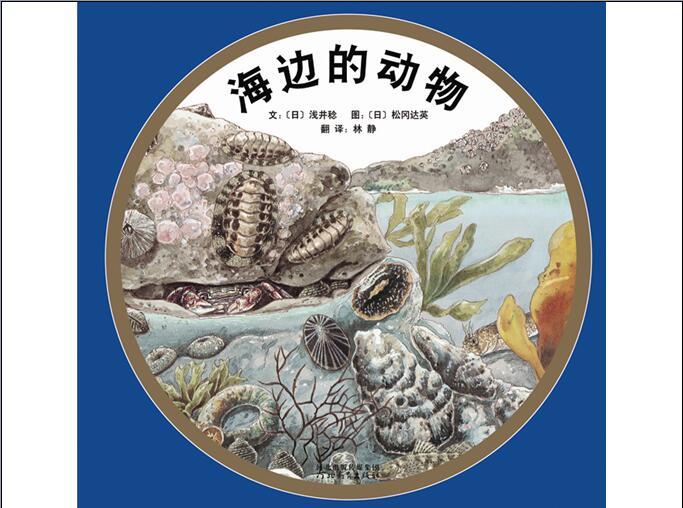 绘本欣赏:海边的动物