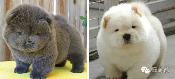 世界上最萌最可爱的20只小狗!-蠢萌说