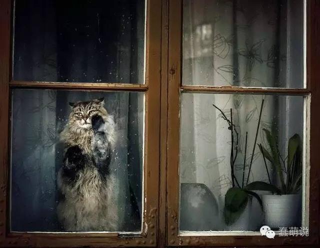 喵星人等待主人归家的样子!画面太美,我怕小鱼干没带够-蠢萌说