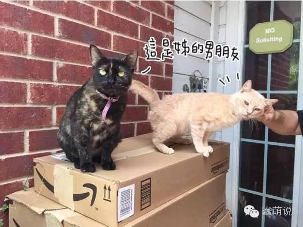 猫咪竟带野生男友回家,收容所惊喜之余只能收编-蠢萌说