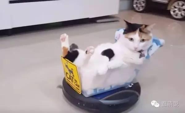 喵星人:扫地机器人,从今以后你就是朕的坐骑啦!-蠢萌说