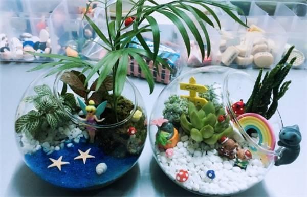 地址:新佳丽广场7楼 人均:108元 微景花园 以diy植物盆景为主的作坊店