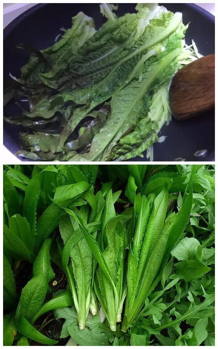 """蔬菜界也有""""双胞胎""""!你分得清莴笋叶和油麦菜吗图片"""