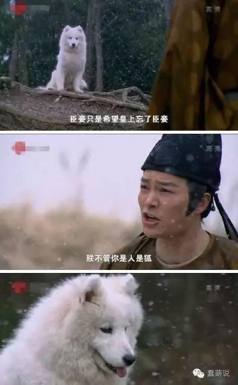 每日一蠢萌:刚问朋友这是啥狗?朋友说叫多乐士……-蠢萌说