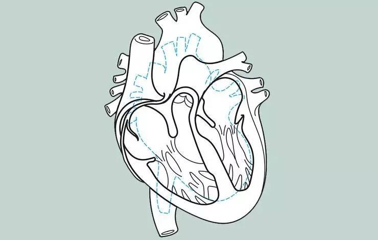 经常跑步,心脏会发生哪些变化?图片