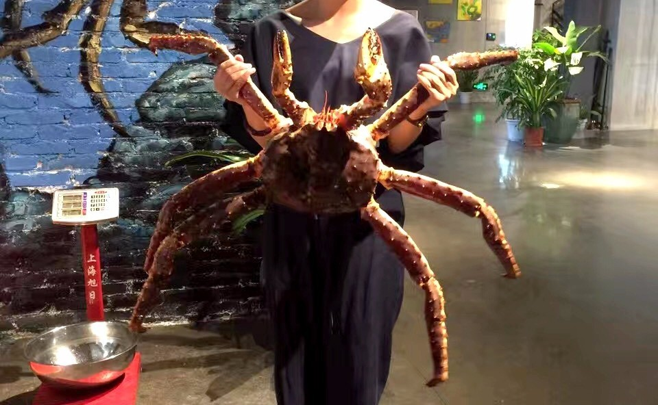 厦门湖里区惊现 2 米长的の巨型帝王蟹 !把渔民养的鲍鱼吃掉了