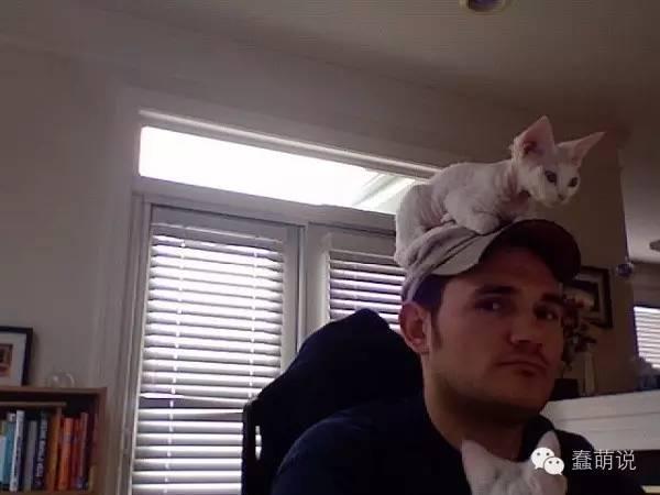 喵星人研究:为什么猫咪喜欢坐在我们的头上?-蠢萌说