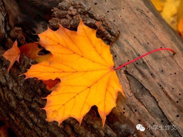 描写秋天落叶的好词好句好段图片