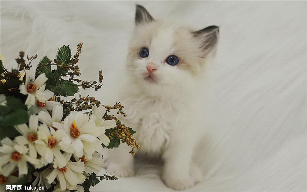 壁纸 动物 猫 猫咪 小猫 桌面 1024_640