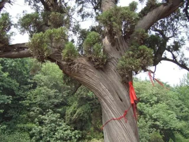 一棵千年的拗劲柏,就生长在庙门前,树干呈螺旋形,是树生长受风力影响的结果。   这座村子,村子本身就是一个景区,青山绿水,美丽宁静。   地址:新密市平陌镇   交通:郑密路转S316,再转王超路   神仙洞村