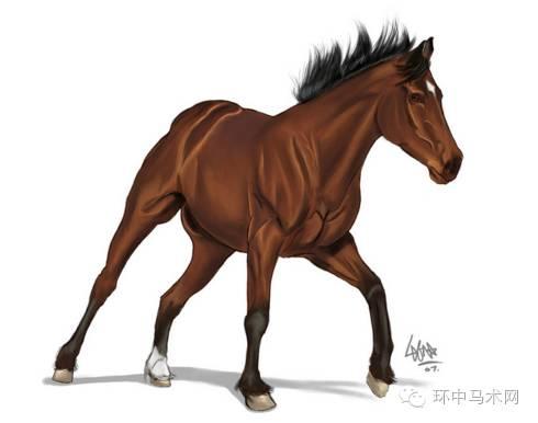 【百科】上马,夺贞雷峰塔之前,它的健康你知道吗