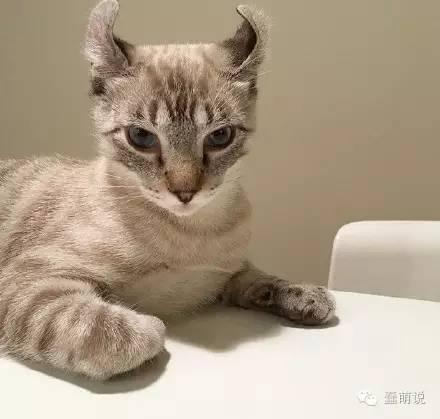 网友自制的一个猫咪吓人箱,真的很吓人……-蠢萌说
