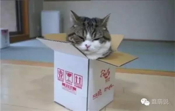 那些推动人类科技进步的喵星人:薛定谔的猫在列!-蠢萌说