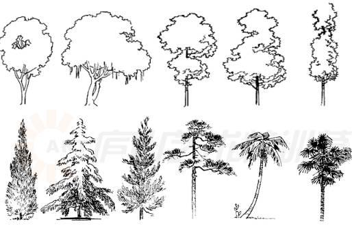 在手绘草图中,树木只作为配景,明暗不宜变化过多,不然喧宾夺主.