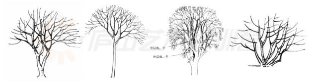 乔木景观手绘线稿