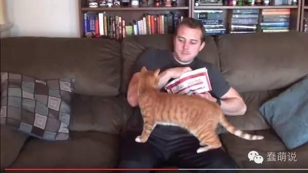 猫奴的小烦恼:不管吃啥,猫咪都要上来抢!是只橘猫-蠢萌说