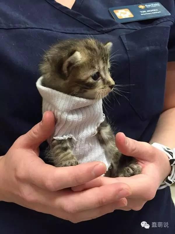 飓风肆虐小猫得救后得到一件小毛衣,也得到了温暖的家!-蠢萌说