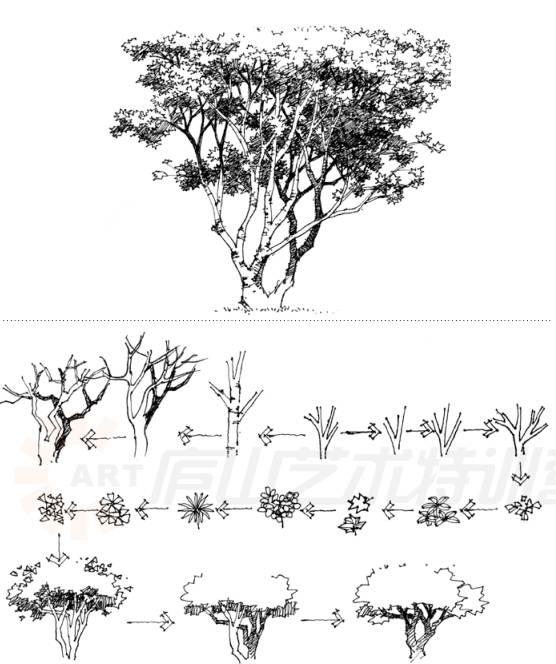 景观树木手绘黑白