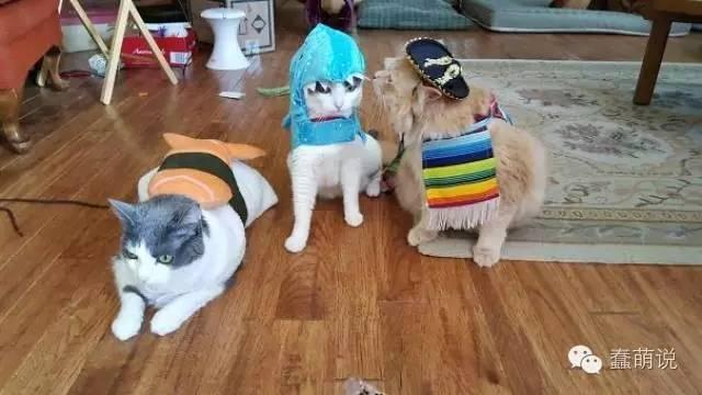 喵星人的cosplay,你能猜出他们在扮演谁吗?-蠢萌说