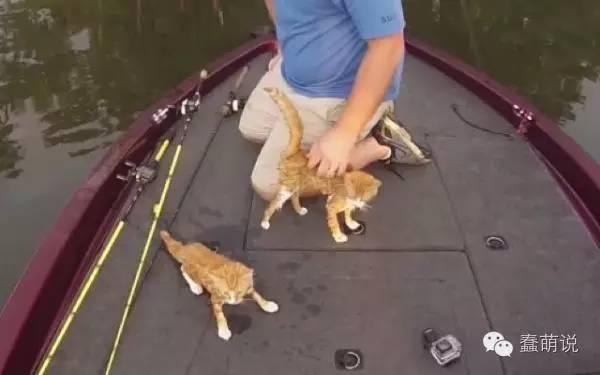 最疯狂的捕鱼故事!美国钓鱼客意外救起2只虎斑猫-蠢萌说