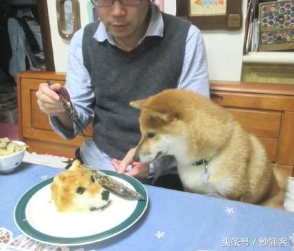 日本一柴犬老爱偷吃,搞怪的主人就做了道美食教育