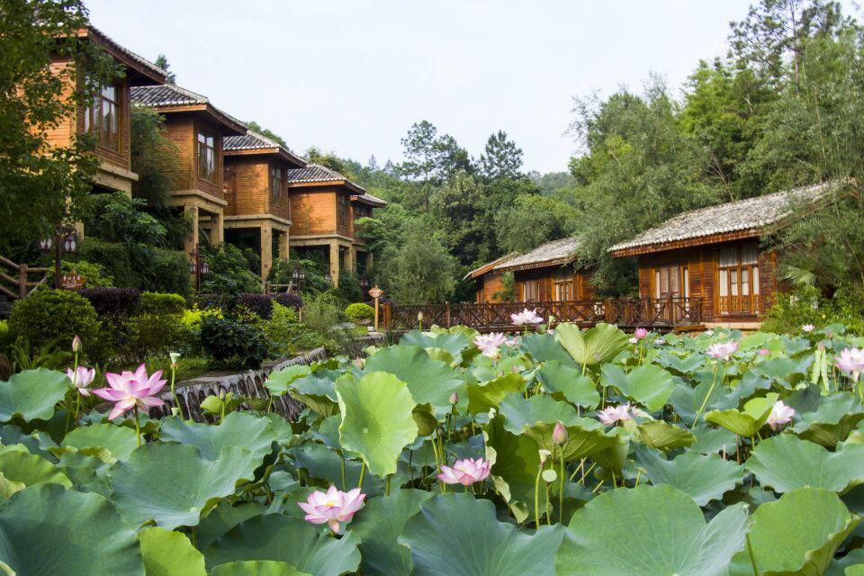 河源叶园温泉酒店门票,回归大自然的养生体验!图片