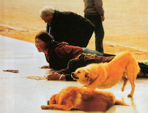 连动物都知道感恩 !