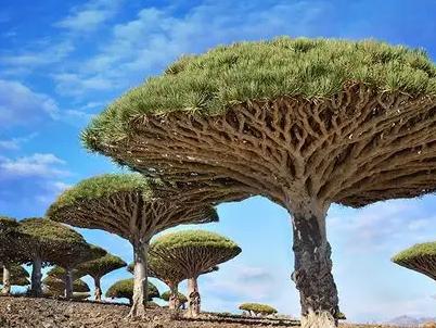 """全球最美的树,最后一棵惊艳了千年!"""""""